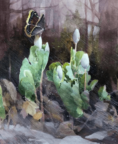 Image of Bloodroot in the Snow artwork